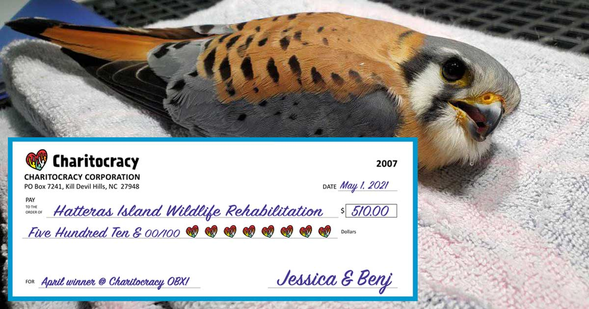 Charitocracy OBX's 7th check to April winner Hatteras Island Wildlife Rehabilitation for $510