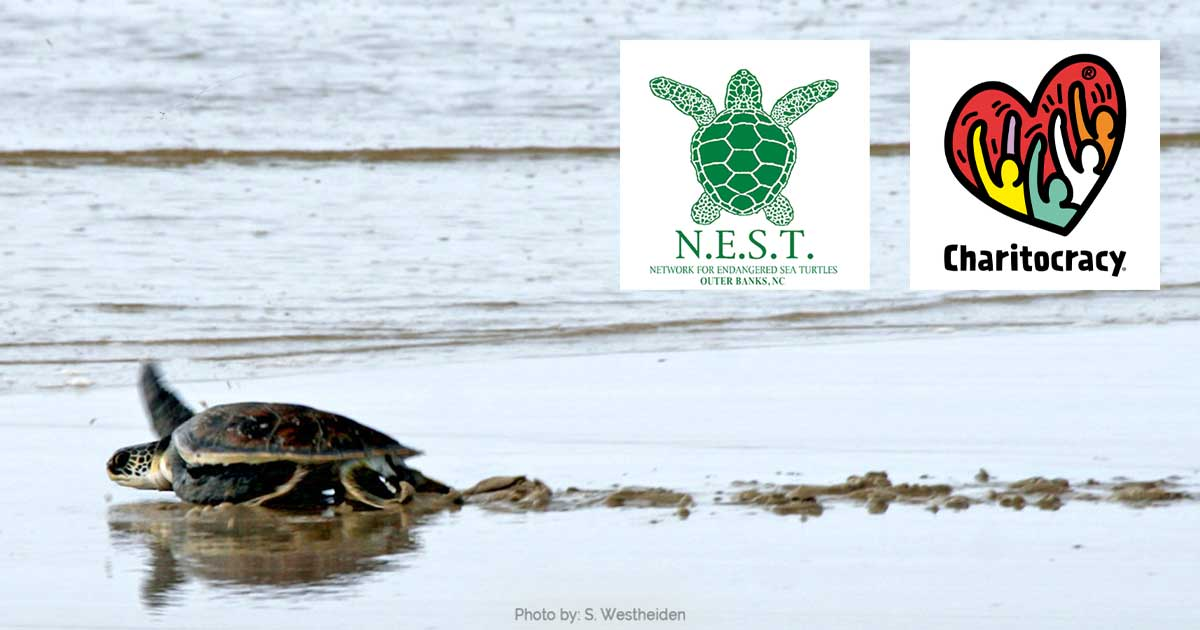 nominee N.E.S.T. (The Network for Endangered Sea Turtles)